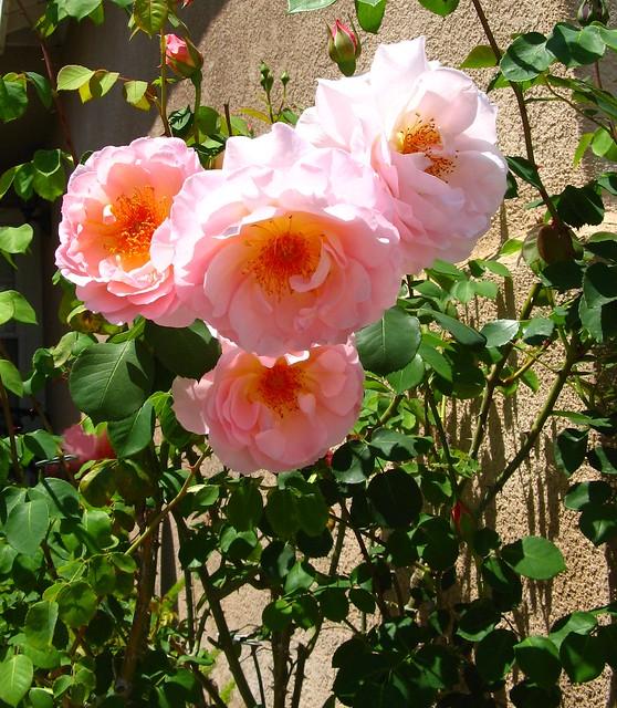 Rose-Belle Story 01