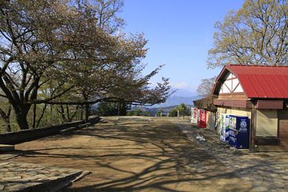 高尾山の頂のサクラ