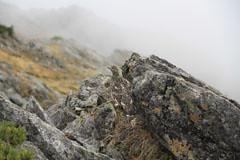 西穂-奥穂の岩場