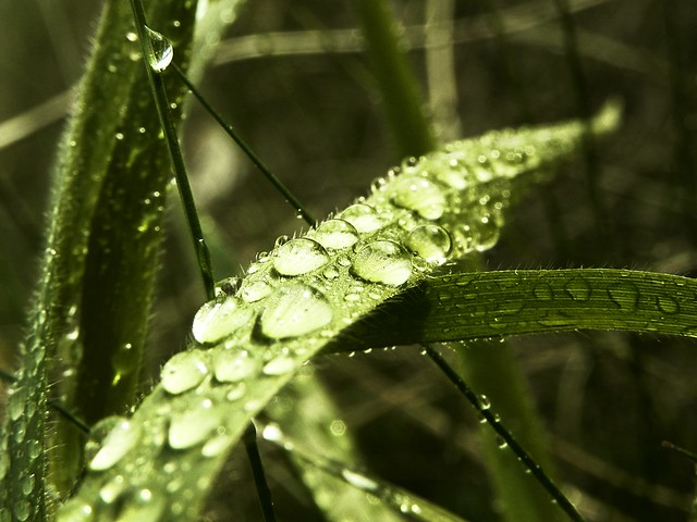 Crystal drops on the delicate blade of grass