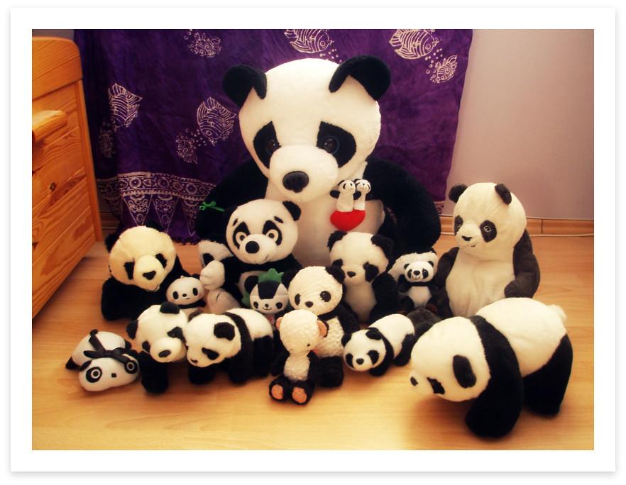 Panda Family Has Grown to 17 Members ¦