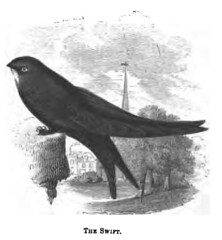 The Natural History of Selborne-1861  - 29