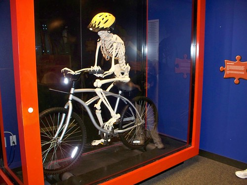 Skeletal bicyclist