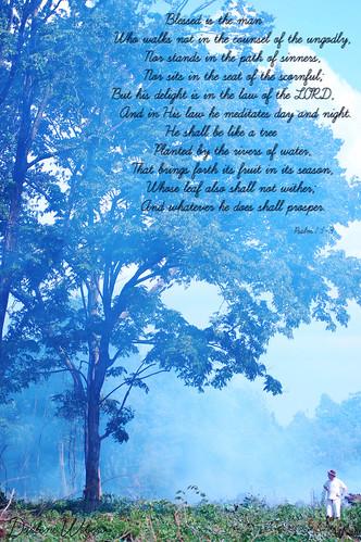 Psalm 1:1-3
