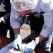 Record Guinness de soba de anchoa en Santoña