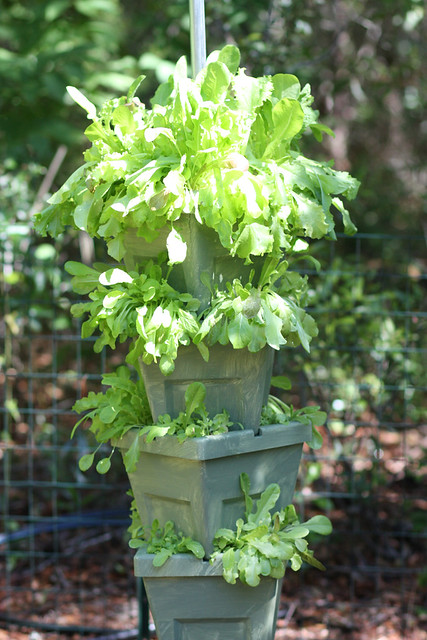 tower of greens