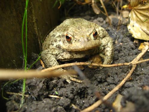 Hello Mr Toad!