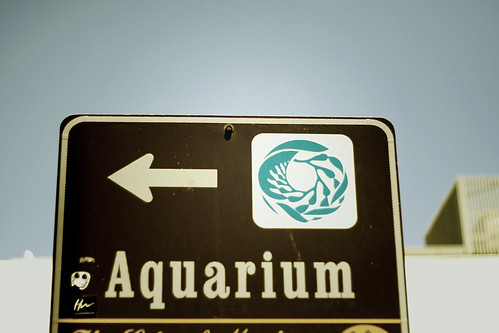 aquarium copy