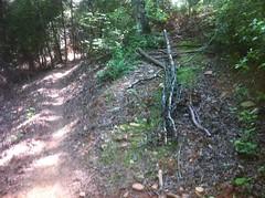 New Moss Branch