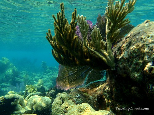 The Reef at Laughing Bird Caye, Belize