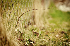 The loner. (Emma) Tags: nature leaves fence 50mm golden spring focus alone branch dof poland explore f18 tones loner olsztyn explored d5000