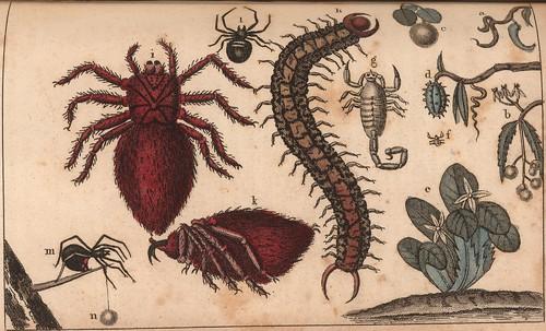 a. Apocin Corne Cabrit. b. Ap. Hérissé. c. Mancelinier. d. Azédarach, e. Quebec, f. Karapaf des Poules. g. Scorpion, h. Bête à millepieds, i. et k. Areignées crabes, l. et m. Areignées à Cul rouge, n. leurs oeufs