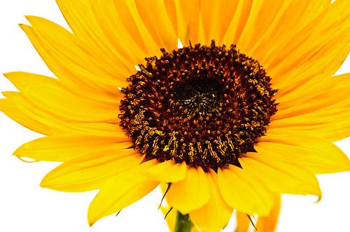Pollen Count Is High (Key)