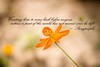 when youre gone.. (Sugar 'n' Crumbs [Nabs!]) Tags: orange never flower photography this missing thought you hard be could islamabad storypeople nabia mehmud