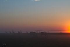 Matin de septembre..... (aracobis) Tags: matin septembre levdesoleil meuse