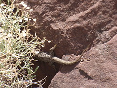 P1120329 (Terezaestkov) Tags: maroko morocco vysokatlas highatlas atlasmountains dabaltubkal jabaltbql jbeltoubkal