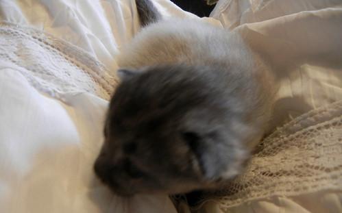 Kittens 012