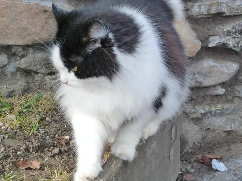 Cat at Glenturret Distillery