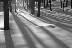 Emerging Sun (peterkelly) Tags: winter light shadow bw sun snow ontario canada tree ice digital forest trunk lakehuron grandbend pineryprovincialpark