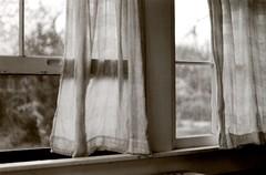 spring breeze (Lilah Shepherd) Tags: camera bw white black film window analog 35mm vintage austin spring kodak bokeh farm tx free peaceful 400tx 400 electro analogue breeze yashica len