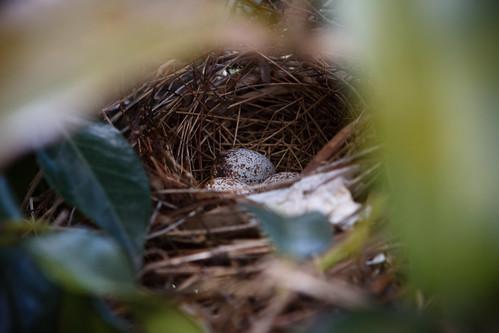 110330 Robin Eggs
