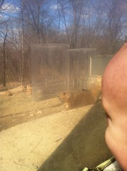 Ground hogs!