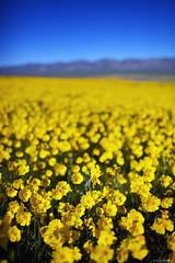 Carrizo Plain (Jay Tankersley Photography) Tags: california lake monument spring san national poppies luis wildflowers soda plain bakersfield obispo carrizo