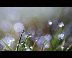 Grass (angus clyne) Tags: world new morning light sun macro green home water grass garden dark lens prime dawn lights scotland spring stem warm frost glow bokeh angus gardening small tripod perthshire lawn scottish drop fresh 100mm dot drip reflect filter dew bubble blade cpl clyne shimer colorphotoaward canon5dmarkii pittensorn