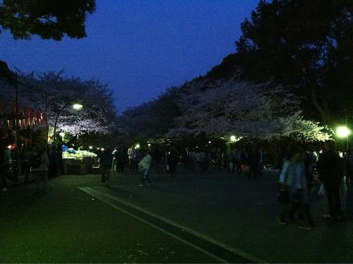 20110410上野お花見