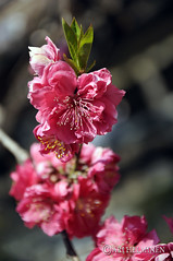 Sakura . Tokyo Japan (Ari Helminen) Tags: life park travel flower colors beautiful cherry island tokyo blog spring amazing nikon shinjuku asia peaceful photoblog  sakura nippon  koen japon breathtaking nihon hanami travelblog japani blooming tokio traveler mindblowing flowerviewing lifeinjapan kevt kukka japanissa kukkii matkustaa d300s aginor nikond300s arihelminen aginorz kirsikkakukka
