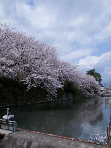 2011SAKURA 011