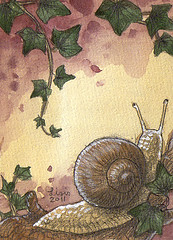 Snail ACEO