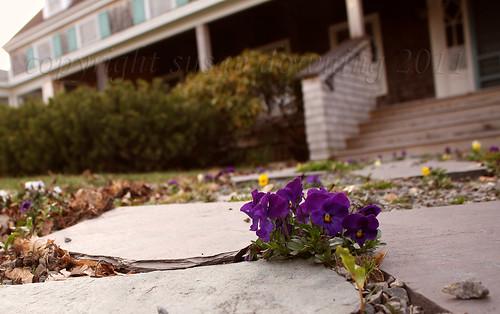 Violet Path