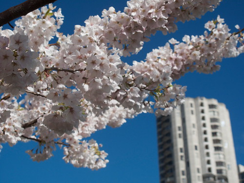 Blossoms and Tower