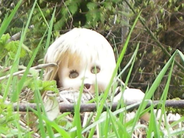 chucky in the bush