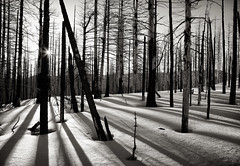 Morning Shadows (Scott Withers Photography) Tags: mthood cooperspur blackwhitephotos tillyjanetrail
