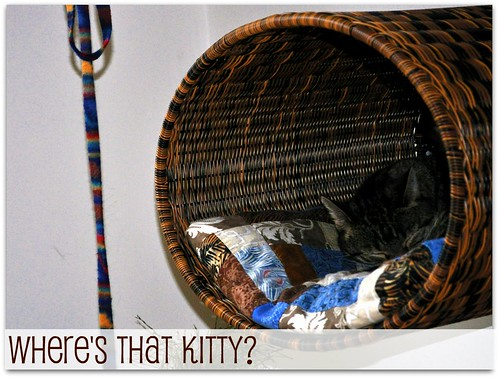Where is that kitty?