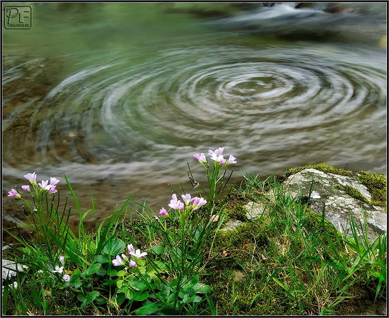Torbellino de Primavera / Spring's whirpool