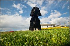 MEDO (Bucko.) Tags: light sky blackandwhite dog flower macro cute lens 50mm nikon outdoor wideangle cutedog waterdrops crazycat nikkor50mm18 d7000 nikond7000