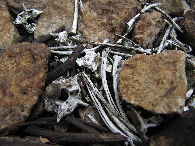 Snake Carcass