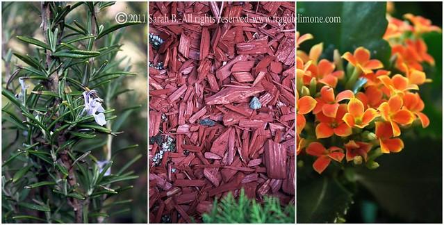 Collage fiori 9edited