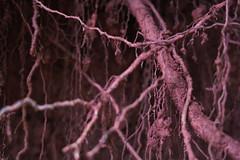 Life on Mars (vaquey) Tags: life red mars macro closeup roots wurzeln eisenoxid eisenhaltig