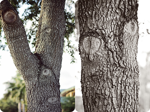 tree face party diptych