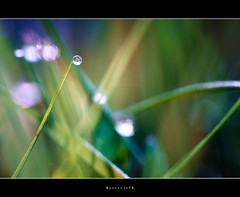 Dreaming of  .  .  .  .  . #2 (Borretje76) Tags: morning holland macro green water netherlands dutch grass iso100 mirror droplets klein groen dof bokeh sony sigma drop dreaming tiny droplet glimmen glans gras tones enschede dauw ochtend f9 weerspiegeling reflectie 180mm spriet reflectionreflections grasspriet a580 wegdromen gupr borretje76 dslra580 refleties sonya580samplepictures sonya580sampleimages