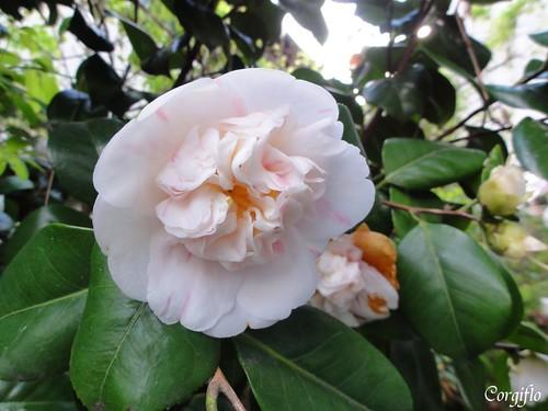 BLOG-110501-jardin-06