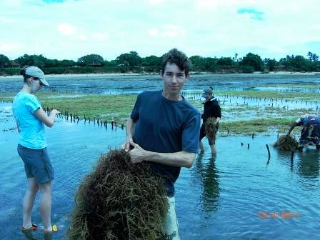 Seaweed harvesting