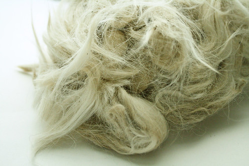 Undyed alpaca fleece
