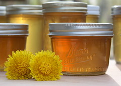 dandelion jelly (lilfishstudios) Tags: yellow golden jar mmmmm kerr canning dandelions dandelionjelly
