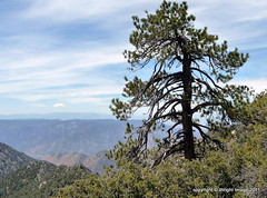 Indian Wells Canyon/ Owens Peak (Kimberley Renee) Tags: california us hike socal mojavedesert ridgecrest us395 inyokern 2011 kerncounty owenspeak sr14 indianwellscanyon stars4esther highestpeakinthesouthernsierranevadamountainrange