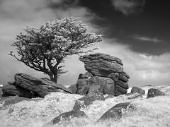 The Usual View (Argentem) Tags: tree rock dartmoor thattree emsworthy emsworthyrocks